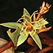 A Nomenclator of Croton (Euphorbiaceae) ...