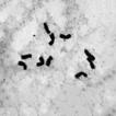 Cluster analysis of karyotype similarity ...