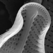 Four new species from the diatom (Bacillariophyceae) ...
