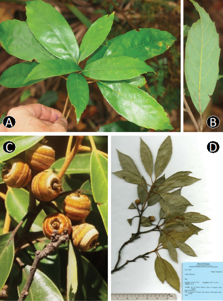 A taxonomic study of Quercus langbianensis complex based on
