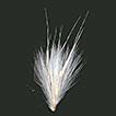 Synoptic taxonomy of <i>Cortaderia</i> Stapf (Danthonioideae, Poaceae)
