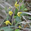 A taxonomic revision of three Chinese spurless species of genus <i>Epimedium</i> L. (Berberidaceae)