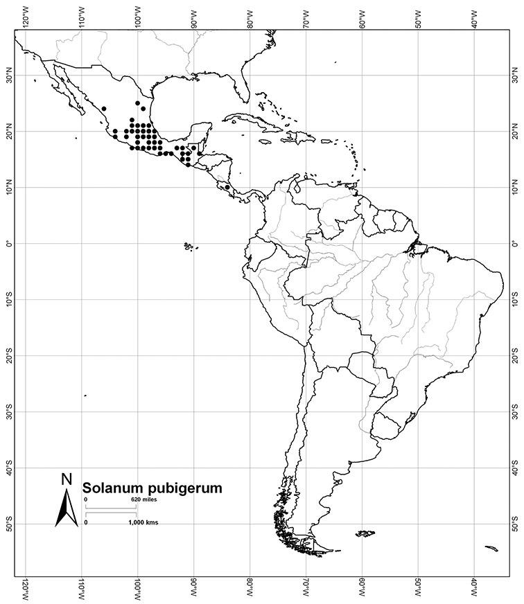 A Revision Of The Dulcamaroid Clade Of Solanum L Solanaceae