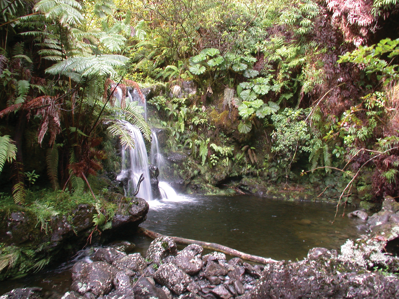New fern species found near waterfalls in Maui